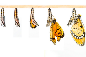 Butterflies Grow Transition Make Yourself More Marketable, Step 2: Transitioning to higher acuity units