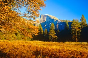 Yosemite magical autumn (P)