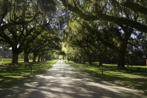 Even though Scarlett O'Hara's plantation is a fictional place, you can still visit tons of historical Civil War sites across the South.